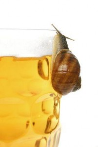 Snailbeer1 | Stay at Home Mum.com.au